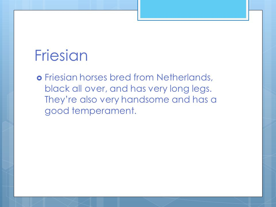 Friesian  Friesian horses bred from Netherlands, black all over, and has very long legs.