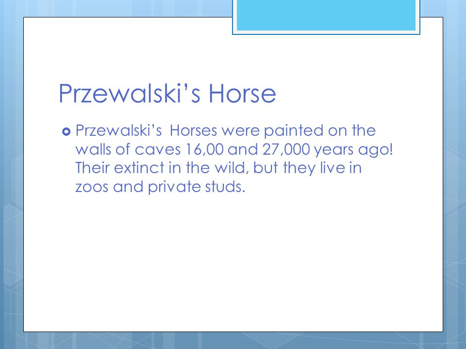 Przewalski's Horse  Przewalski's Horses were painted on the walls of caves 16,00 and 27,000 years ago.