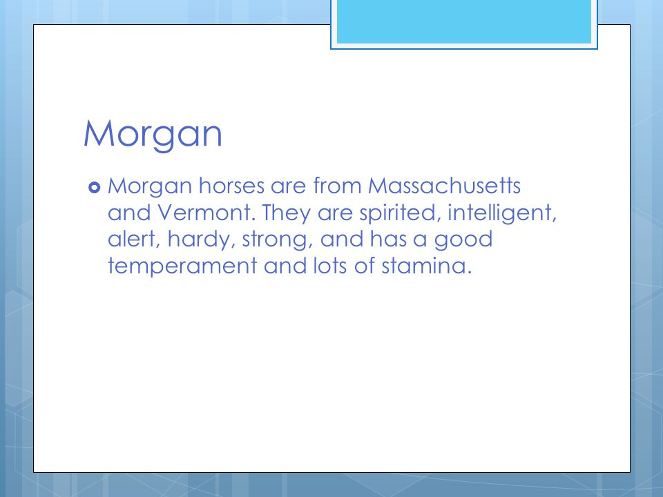 Morgan  Morgan horses are from Massachusetts and Vermont.