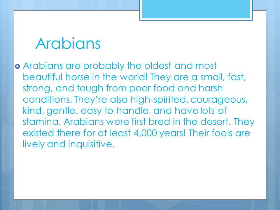 Arabians  Arabians are probably the oldest and most beautiful horse in the world.