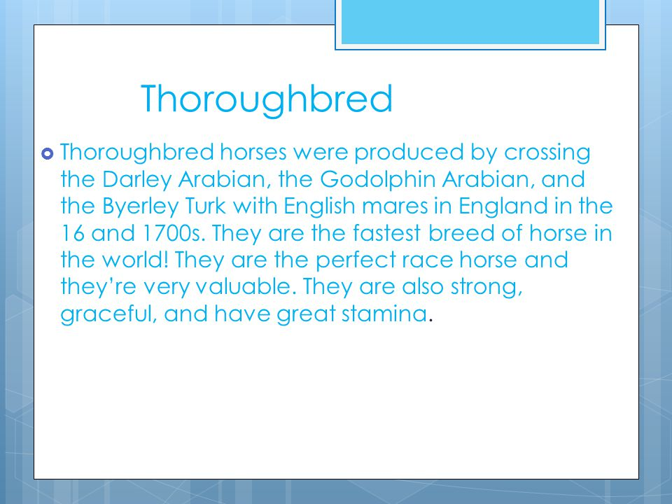 Thoroughbred  Thoroughbred horses were produced by crossing the Darley Arabian, the Godolphin Arabian, and the Byerley Turk with English mares in England in the 16 and 1700s.