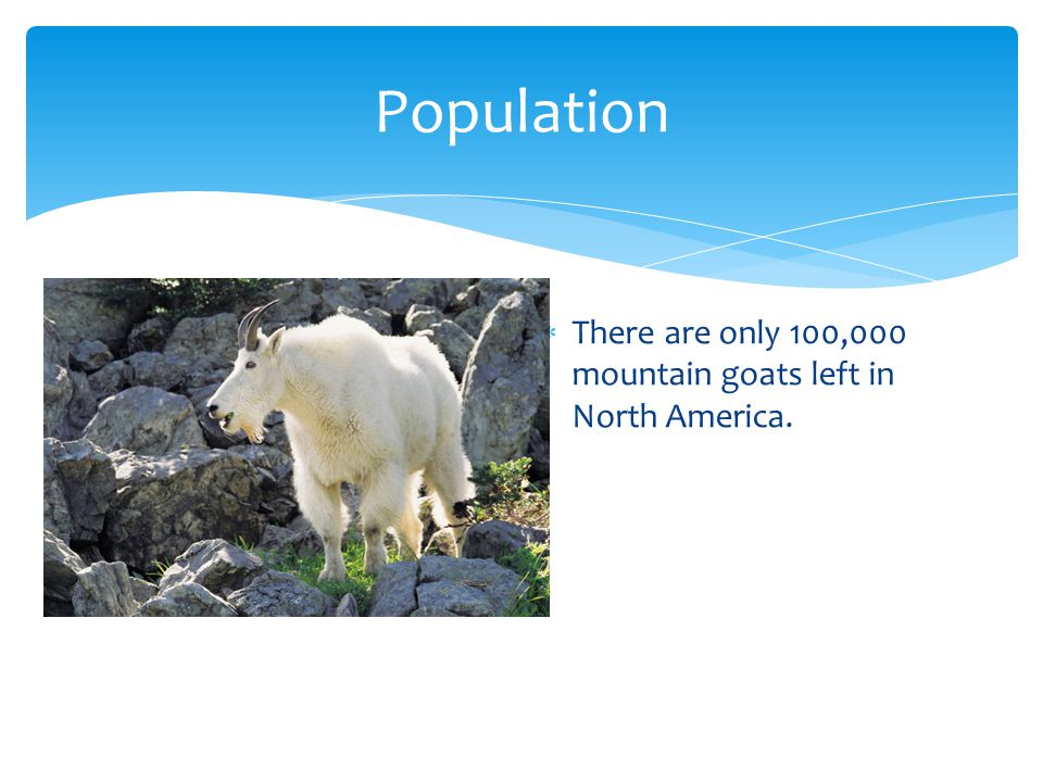 Population  There are only 100,000 mountain goats left in North America.