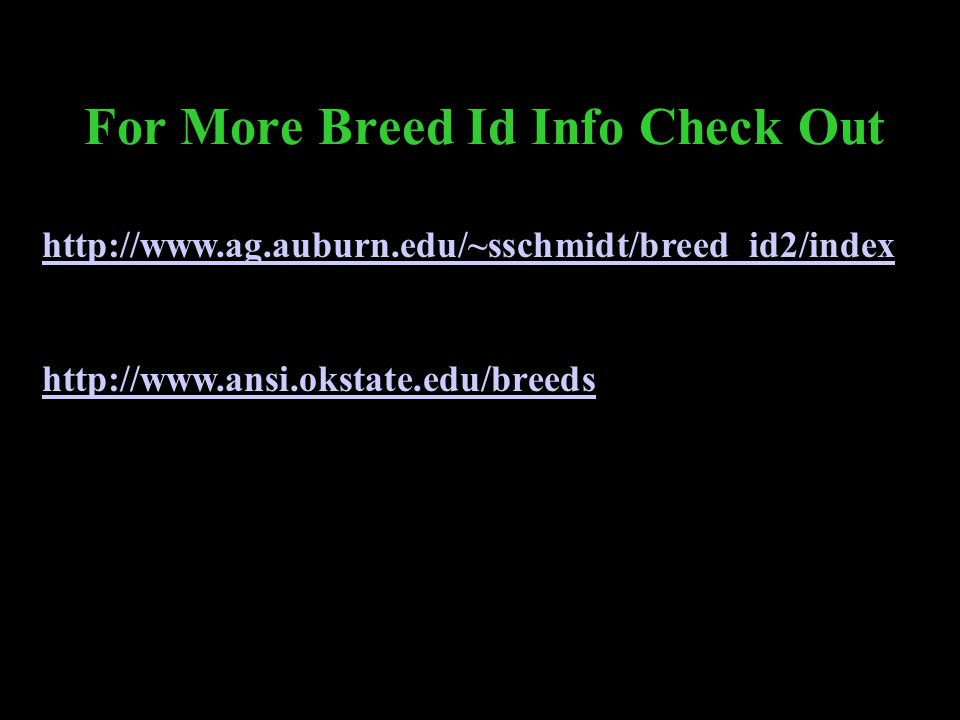 For More Breed Id Info Check Out http://www.ag.auburn.edu/~sschmidt/breed_id2/index http://www.ansi.okstate.edu/breeds