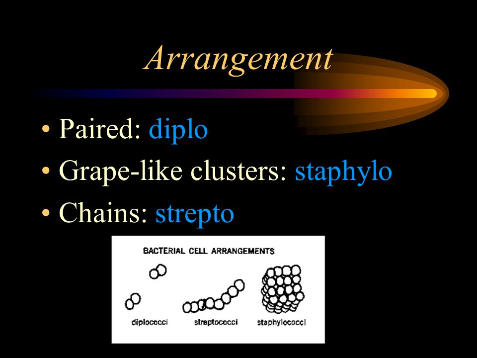 Structure of Bacteria Two parts to Bacteria Structure: –Arrangement –Shape