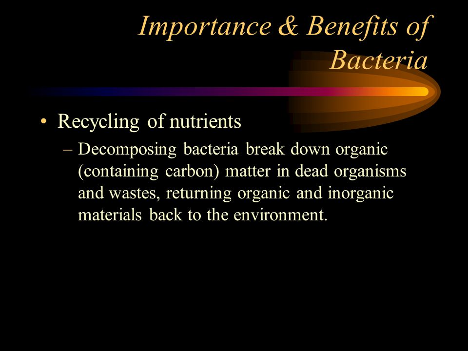 Importance & Benefits of Bacteria Nitrogen fixation: –Nitrogen is essential (necessary) for all organisms Found in DNA, RNA, proteins, and ATP –Only bacteria can convert the nitrogen gas in the atmosphere to nitrogen that other organisms can use Example: legume plants roots and nitrogen fixation bacteria (p.