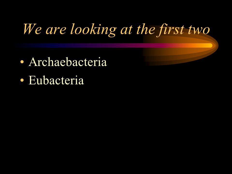 What are the 6 Kingdoms Archaebacteria Eubacteria Protists Fungi Plants Animals