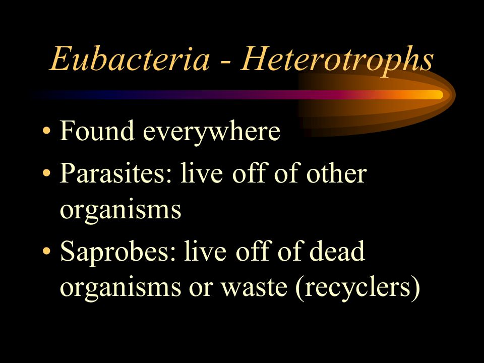 Archaebacteria Live in extreme locations: –Oxygen-free environments –Concentrated salt-water –Hot, acidic water