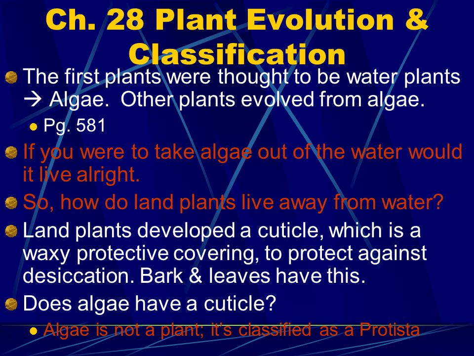 Ch. 28 Plant Evolution & Classification The first plants were thought to be water plants  Algae. Other plants evolved from algae. Pg. 581 If you were