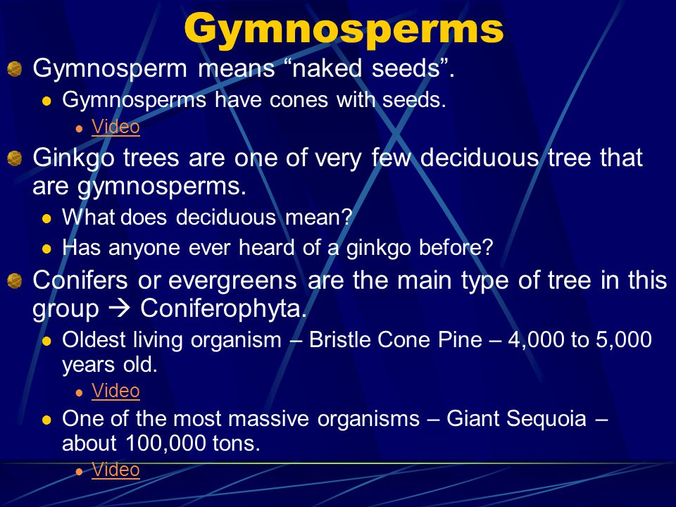 Gymnosperms Gymnosperm means naked seeds . Gymnosperms have cones with seeds.