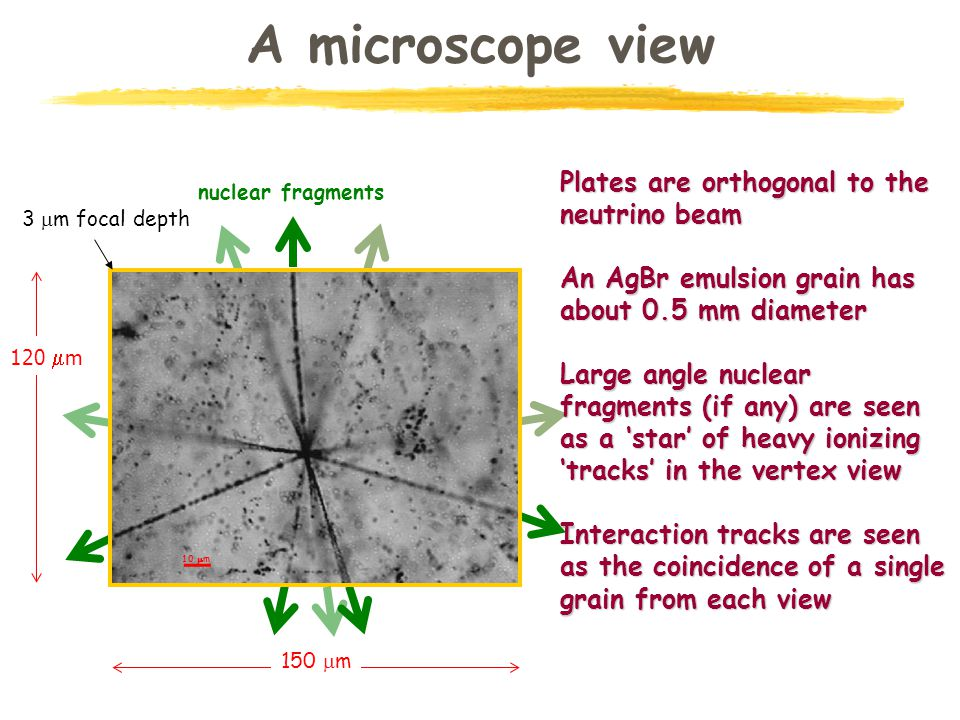 A microscope view 120  m 150  m 3  m focal depth Plates are orthogonal to the neutrino beam An AgBr emulsion grain has about 0.5 mm diameter Large