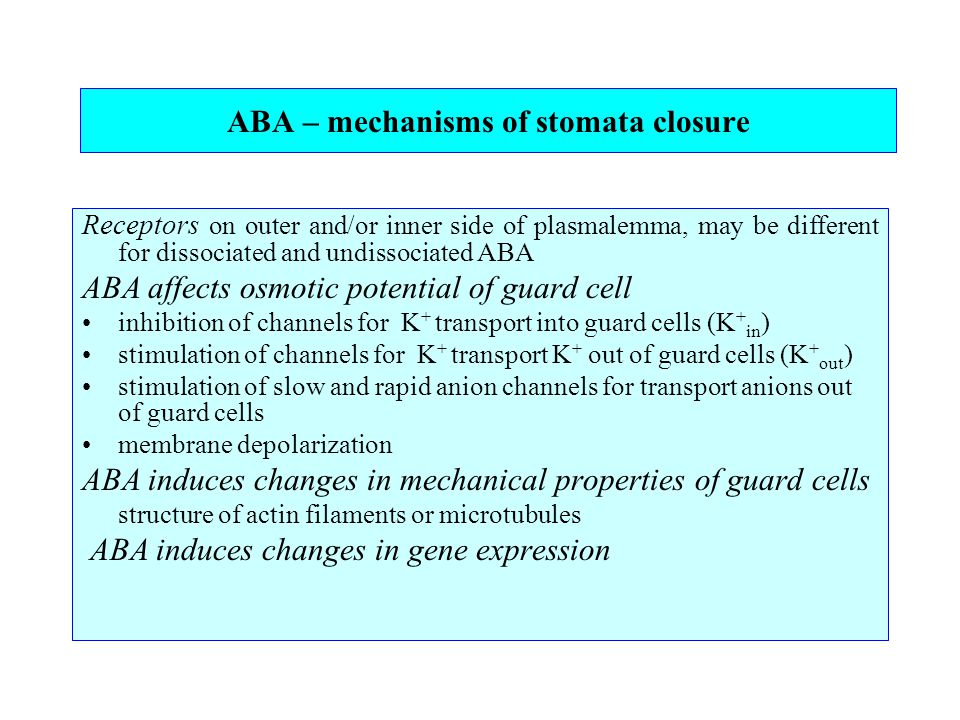 ABA – mechanisms of stomata closure Receptors on outer and/or inner side of plasmalemma, may be different for dissociated and undissociated ABA ABA affects osmotic potential of guard cell inhibition of channels for K + transport into guard cells (K + in ) stimulation of channels for K + transport K + out of guard cells (K + out ) stimulation of slow and rapid anion channels for transport anions out of guard cells membrane depolarization ABA induces changes in mechanical properties of guard cells structure of actin filaments or microtubules ABA induces changes in gene expression