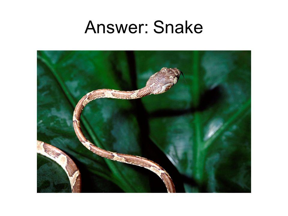 Answer: Snake