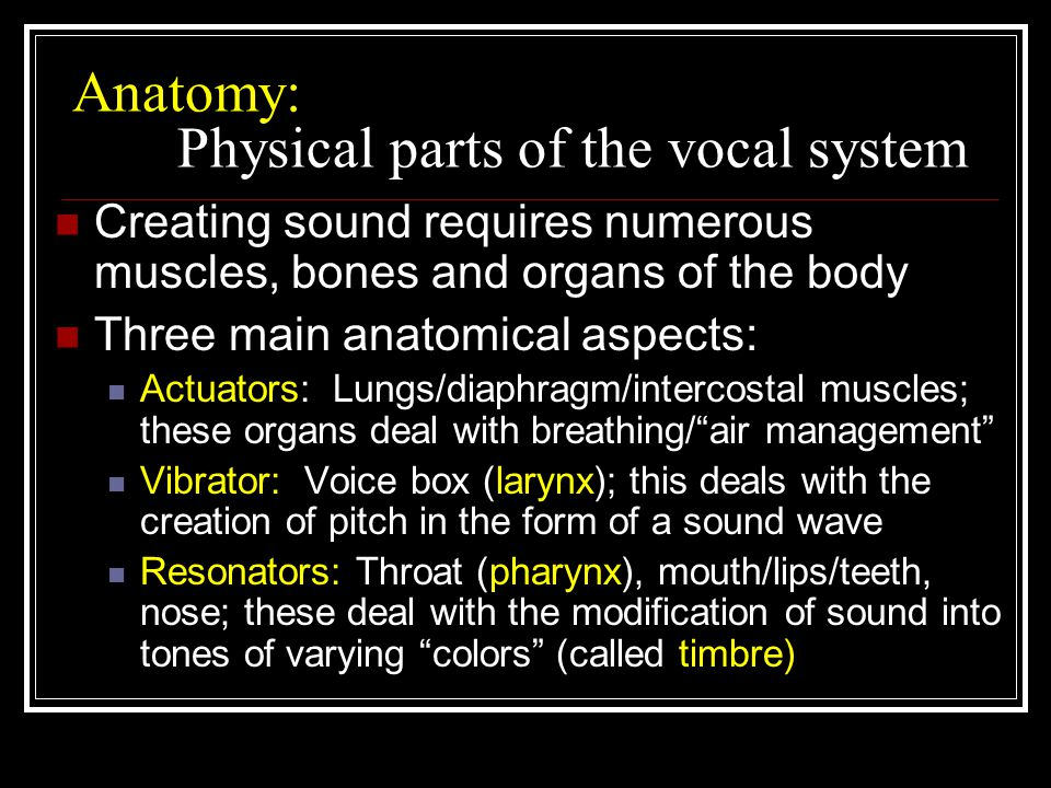 Anatomy: Physical parts of the vocal system Creating sound requires numerous muscles, bones and organs of the body Three main anatomical aspects: Actuators: Lungs/diaphragm/intercostal muscles; these organs deal with breathing/ air management Vibrator: Voice box (larynx); this deals with the creation of pitch in the form of a sound wave Resonators: Throat (pharynx), mouth/lips/teeth, nose; these deal with the modification of sound into tones of varying colors (called timbre)