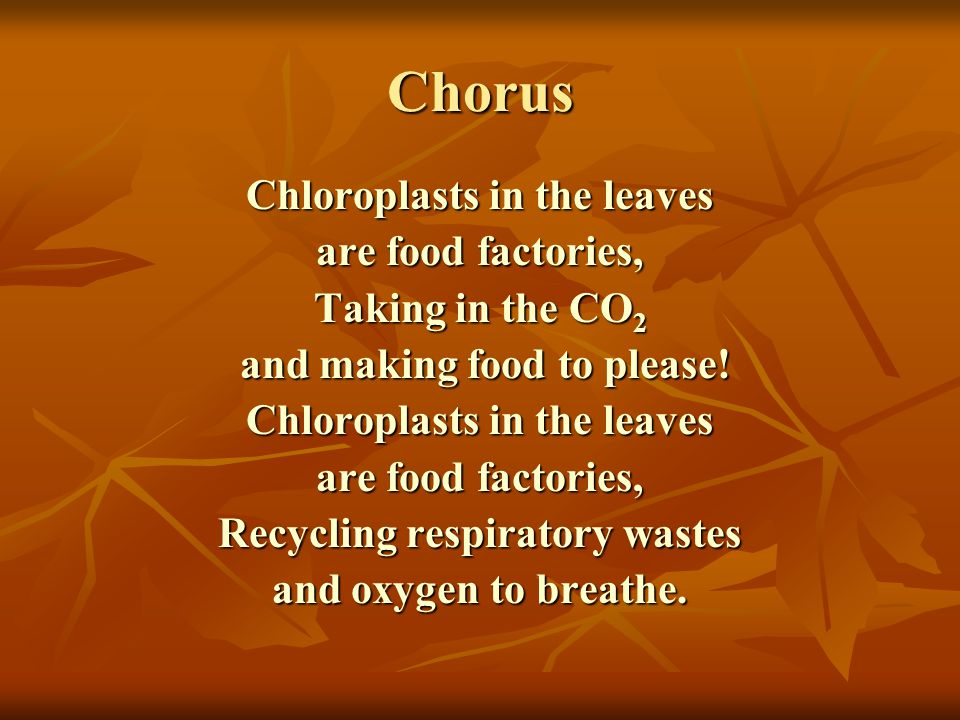 Chorus Chloroplasts in the leaves are food factories, Taking in the CO 2 and making food to please.