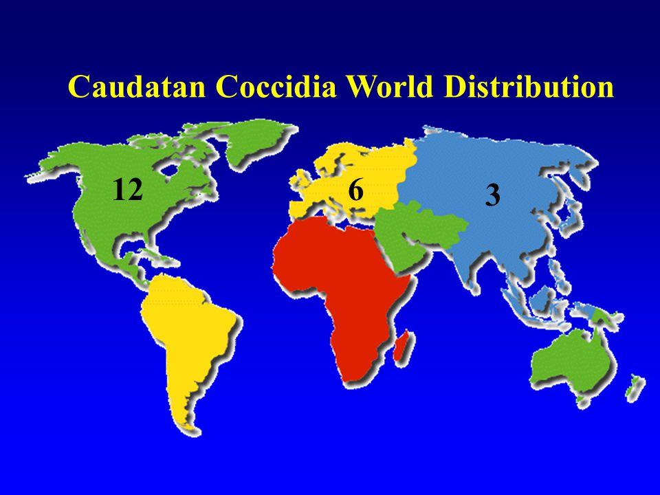 Caudatan Coccidia World Distribution 126 3