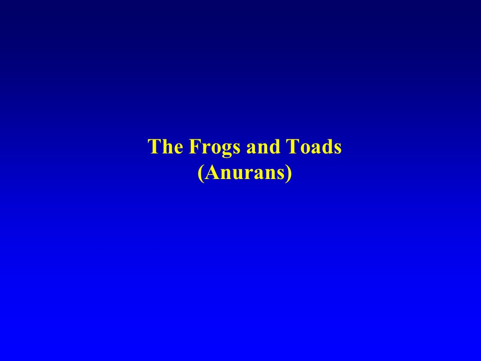 The Frogs and Toads (Anurans)