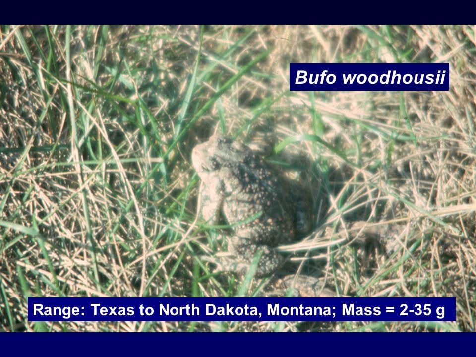 Bufo woodhousii Range: Texas to North Dakota, Montana; Mass = 2-35 g