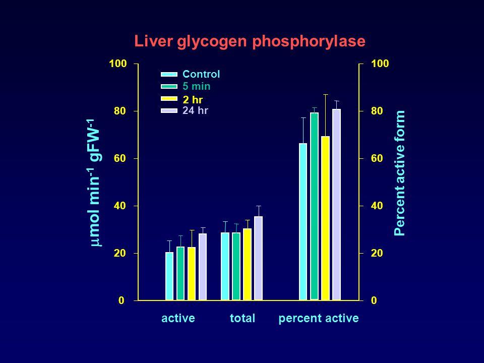 0 20 40 60 80 100 0 20 40 60 80 100 activetotalpercent active Percent active form Liver glycogen phosphorylase Control 5 min 2 hr 24 hr  mol min -1 g