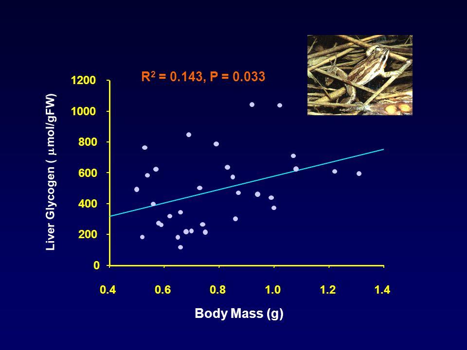 Body Mass (g) 0.40.60.81.01.21.4 Liver Glycogen (  mol/gFW ) 0 200 400 600 800 1000 1200 R 2 = 0.143, P = 0.033