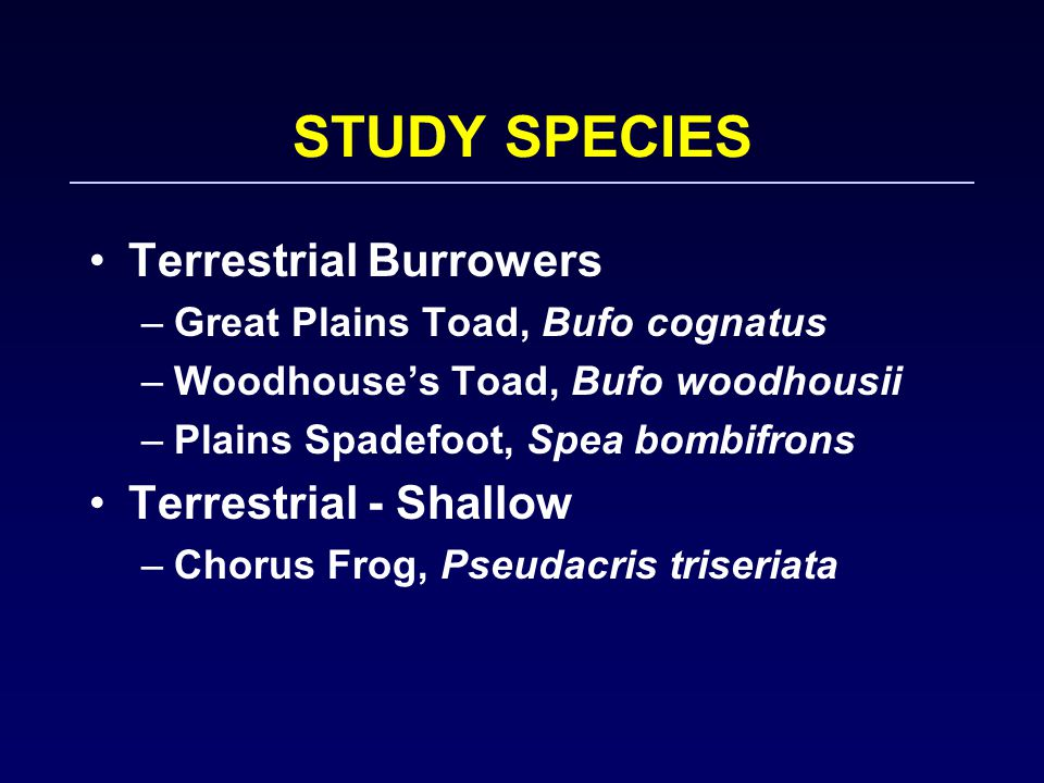 STUDY SPECIES Terrestrial Burrowers –Great Plains Toad, Bufo cognatus –Woodhouse's Toad, Bufo woodhousii –Plains Spadefoot, Spea bombifrons Terrestrial - Shallow –Chorus Frog, Pseudacris triseriata