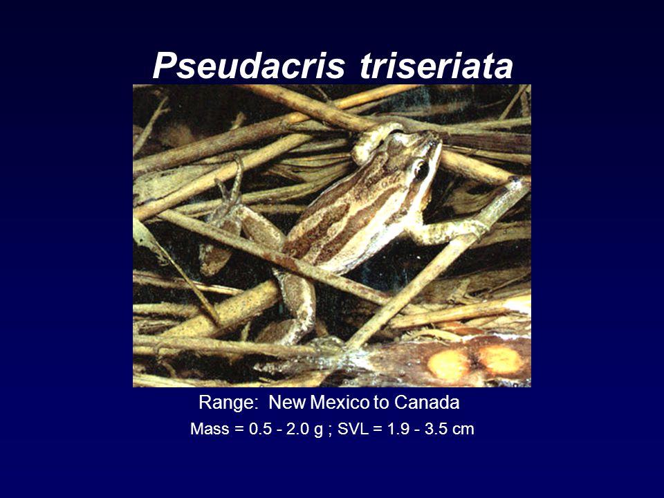 Pseudacris triseriata Range: New Mexico to Canada Mass = 0.5 - 2.0 g ; SVL = 1.9 - 3.5 cm
