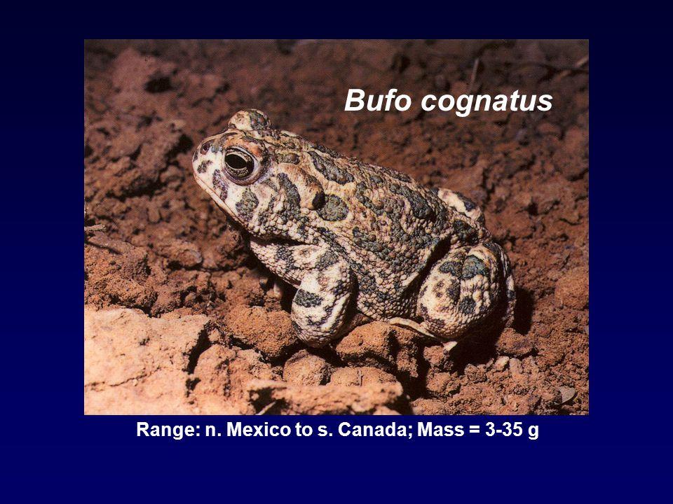 Bufo cognatus Range: n. Mexico to s. Canada; Mass = 3-35 g