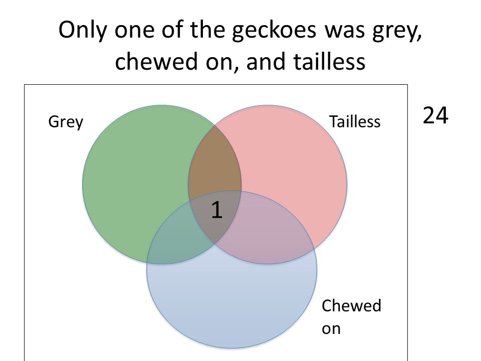 Only one of the geckoes was grey, chewed on, and tailless Chewed on TaillessGrey 24 1