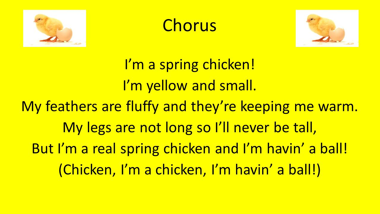 Chorus I'm a spring chicken.I'm yellow and small.