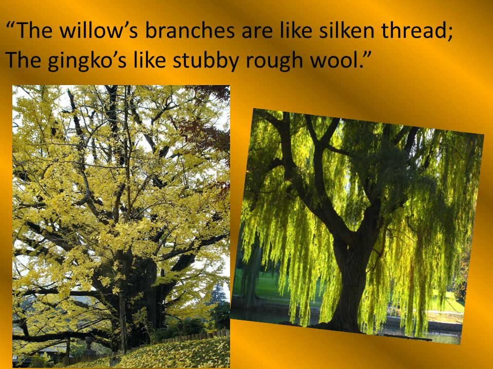 """The willow's branches are like silken thread; The gingko's like stubby rough wool."""