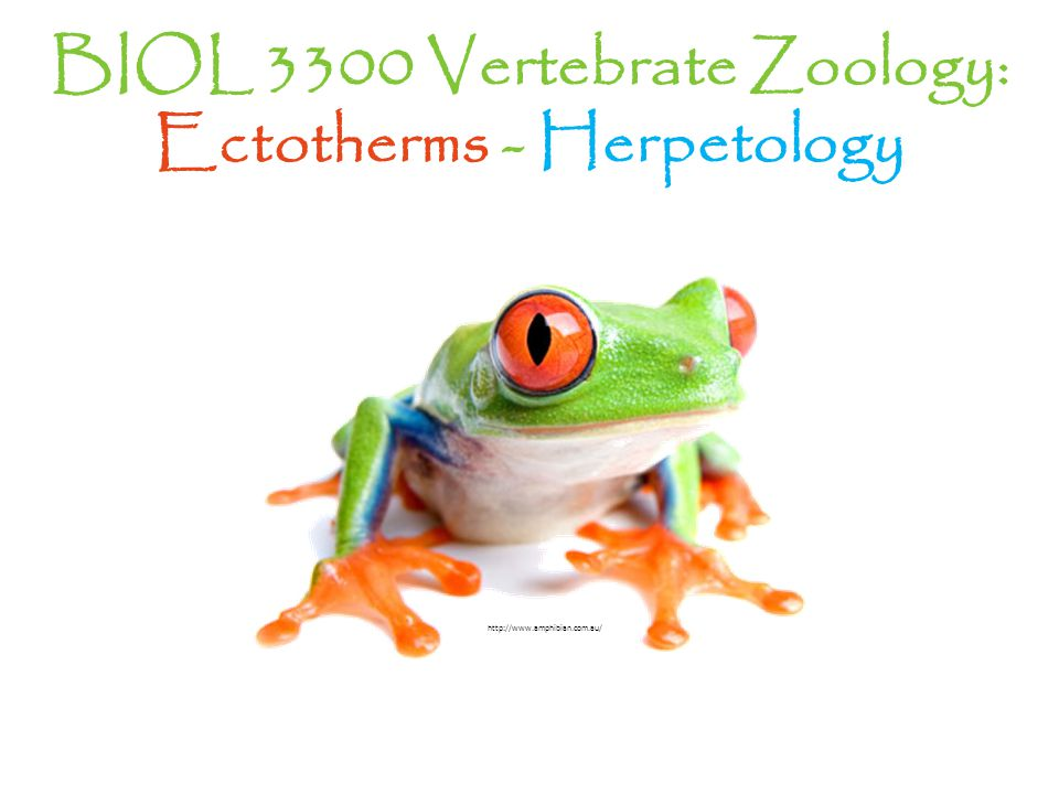 BIOL 3300 Vertebrate Zoology: Ectotherms - Herpetology http://www.amphibian.com.au/