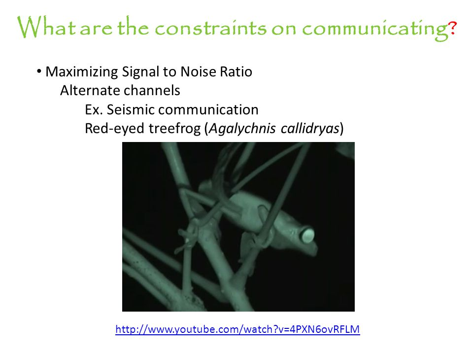 What are the constraints on communicating? Maximizing Signal to Noise Ratio Alternate channels Ex. Seismic communication Red-eyed treefrog (Agalychnis