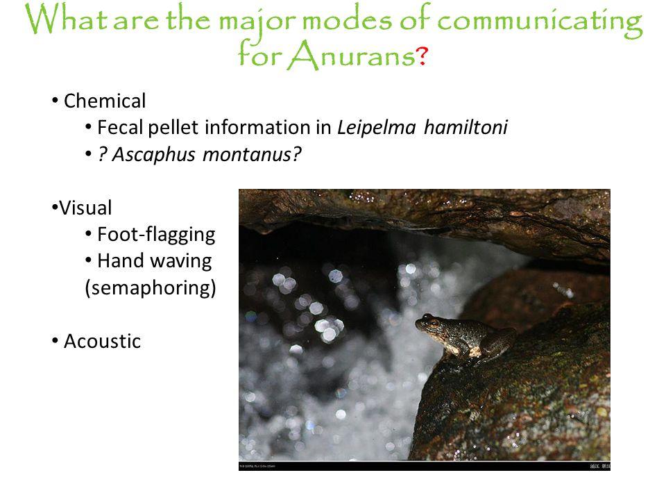 Chemical Fecal pellet information in Leipelma hamiltoni .