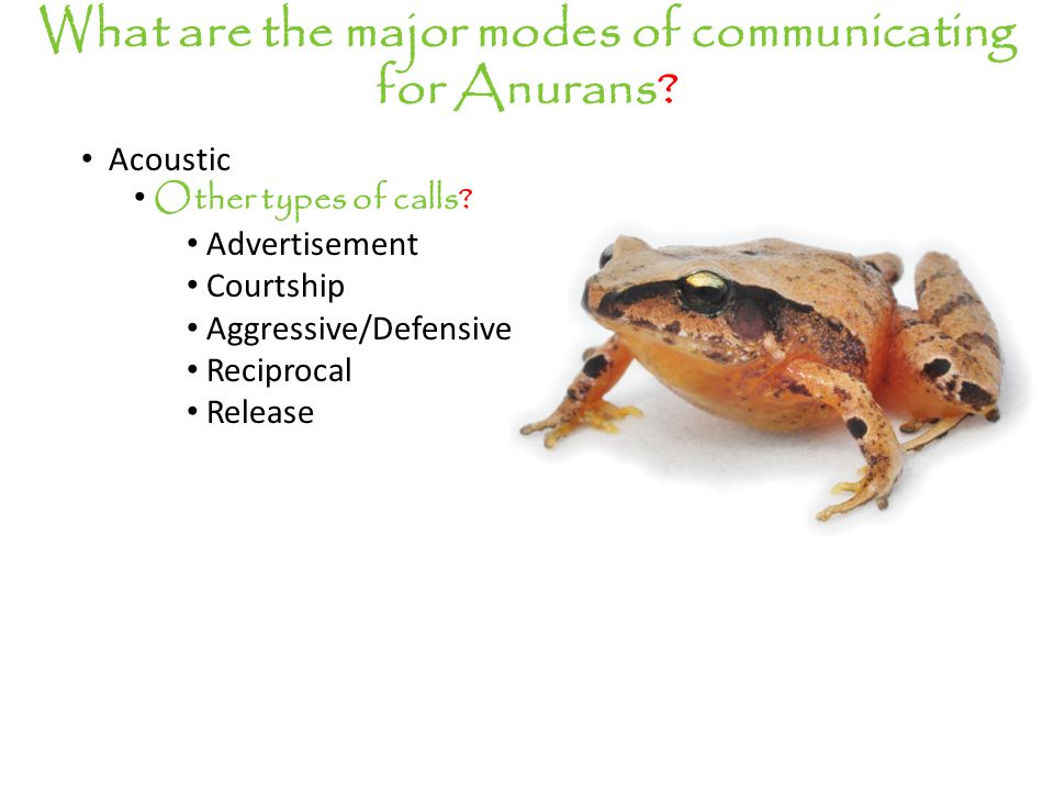 Acoustic Other types of calls.