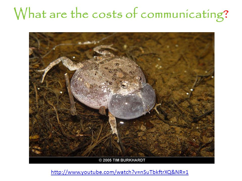 What are the costs of communicating? http://www.youtube.com/watch?v=nSuTbkftrXQ&NR=1