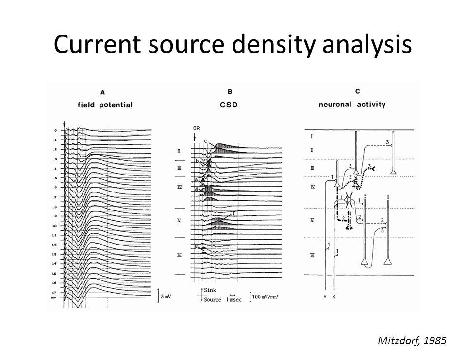 Current source density analysis Mitzdorf, 1985
