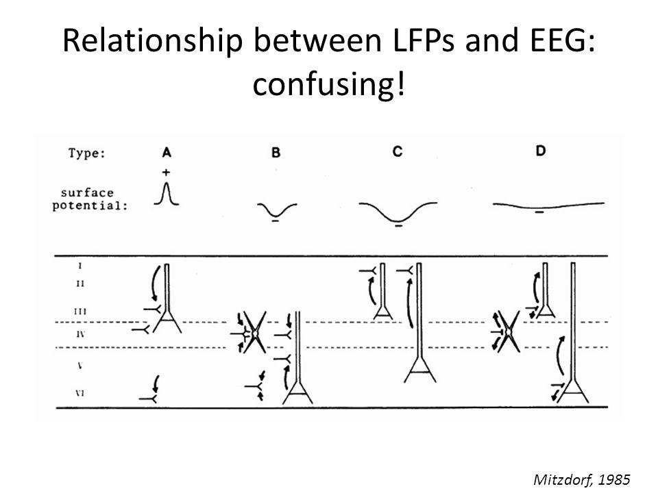 Relationship between LFPs and EEG: confusing! Mitzdorf, 1985