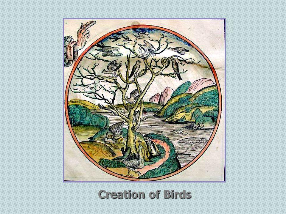 Creation of Birds
