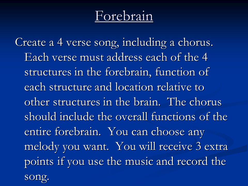 Forebrain Create a 4 verse song, including a chorus. Each verse must address each of the 4 structures in the forebrain, function of each structure and