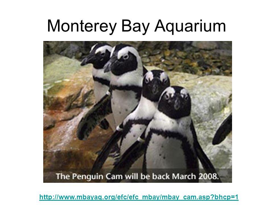 Monterey Bay Aquarium http://www.mbayaq.org/efc/efc_mbay/mbay_cam.asp bhcp=1