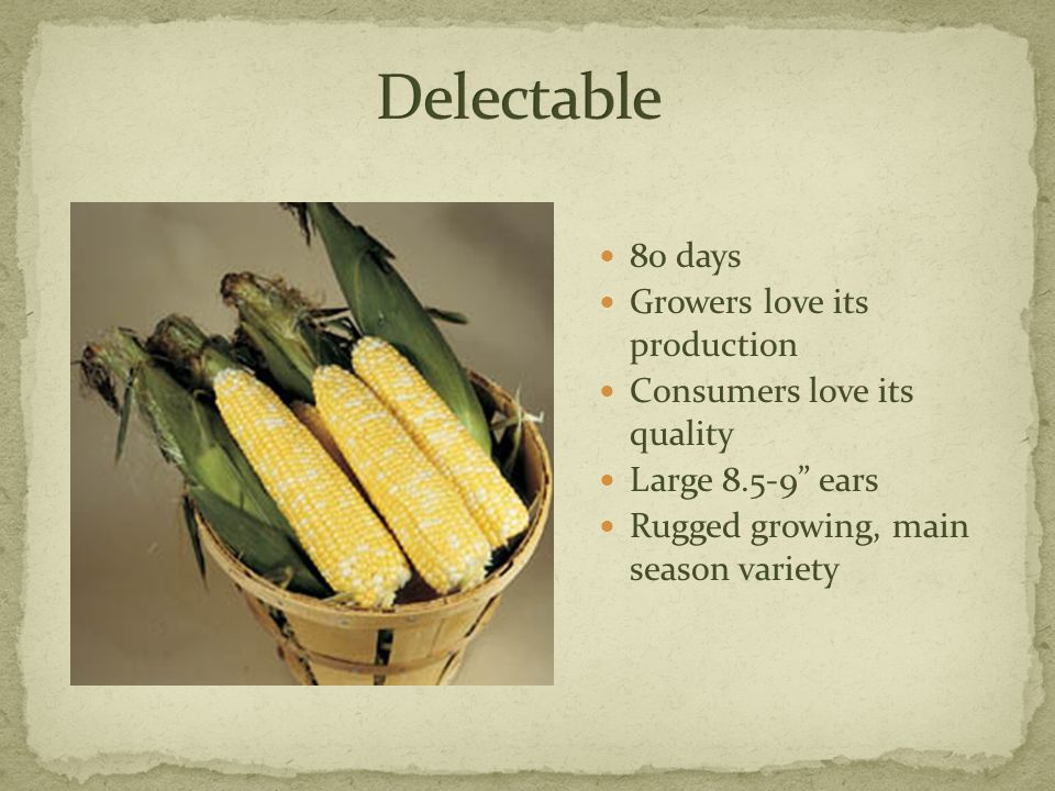 "80 days Growers love its production Consumers love its quality Large 8.5-9"" ears Rugged growing, main season variety"