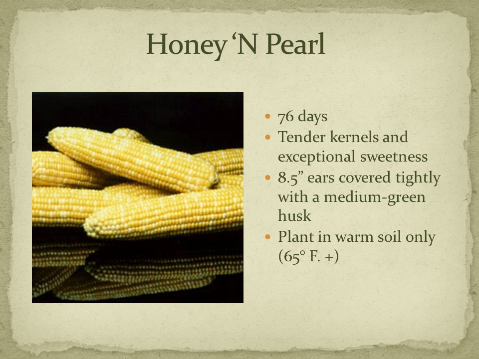 76 days Tender kernels and exceptional sweetness 8.5 ears covered tightly with a medium-green husk Plant in warm soil only (65° F.