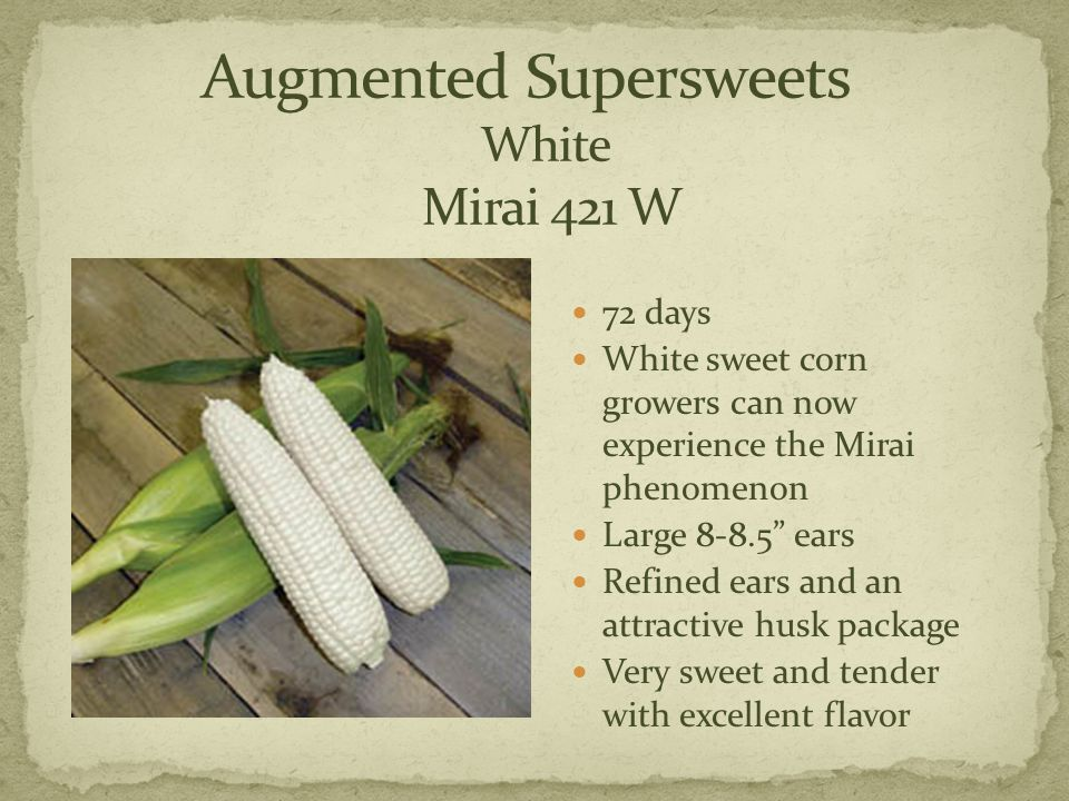 72 days White sweet corn growers can now experience the Mirai phenomenon Large 8-8.5 ears Refined ears and an attractive husk package Very sweet and tender with excellent flavor