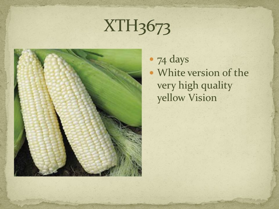 74 days White version of the very high quality yellow Vision