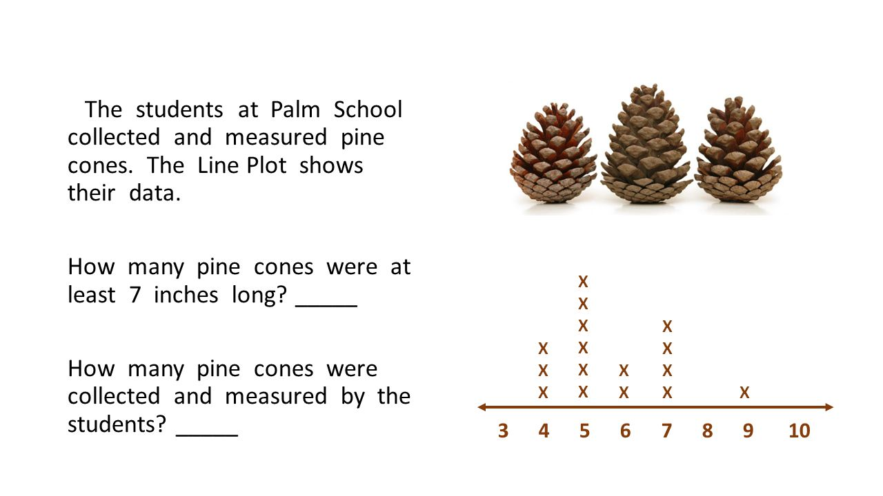 The students at Palm School collected and measured pine cones.