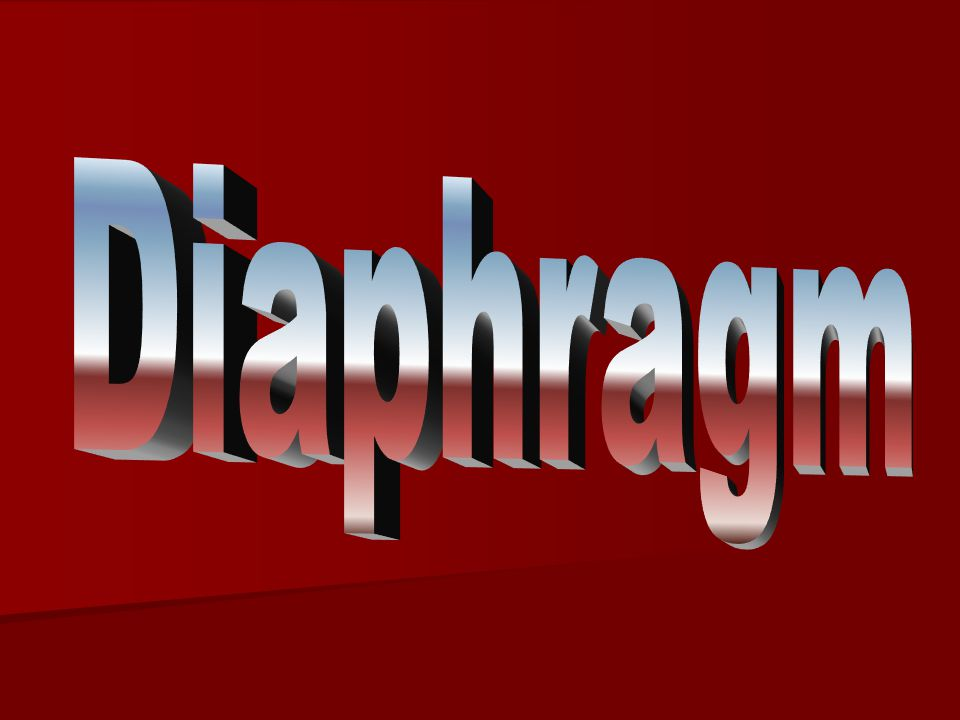 Diaphragm The diaphragm is a thin muscular and tendinous septum that separates thorax & abdominal cavities.