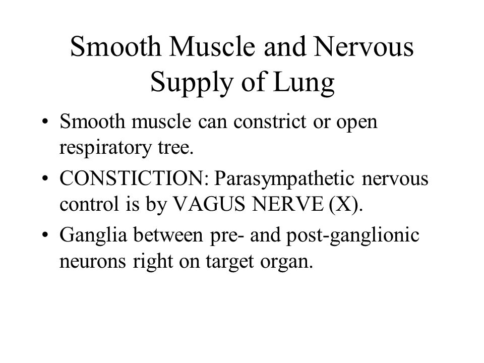 Smooth Muscle and Nervous Supply of Lung Smooth muscle can constrict or open respiratory tree.
