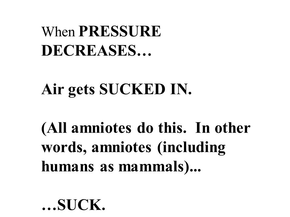 When PRESSURE DECREASES… Air gets SUCKED IN. (All amniotes do this.