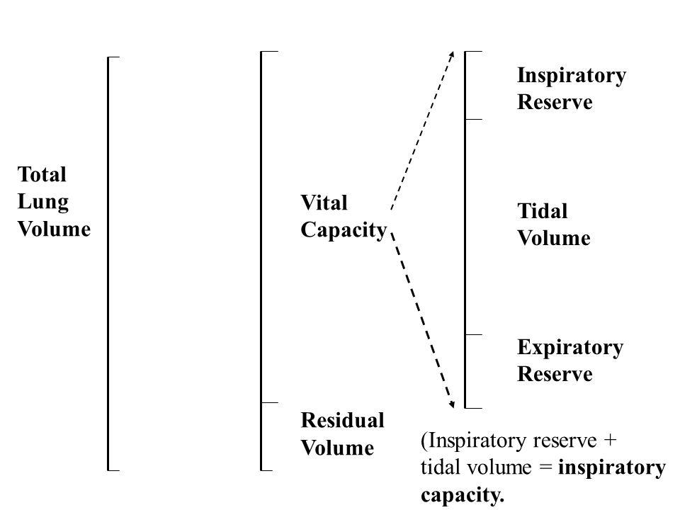 Total Lung Volume Vital Capacity Residual Volume Inspiratory Reserve Tidal Volume Expiratory Reserve (Inspiratory reserve + tidal volume = inspiratory