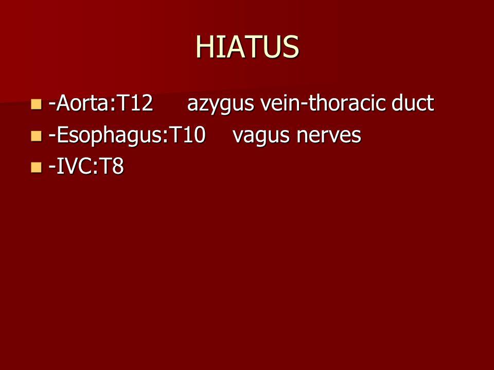 HIATUS -Aorta:T12 azygus vein-thoracic duct -Aorta:T12 azygus vein-thoracic duct -Esophagus:T10 vagus nerves -Esophagus:T10 vagus nerves -IVC:T8 -IVC:T8