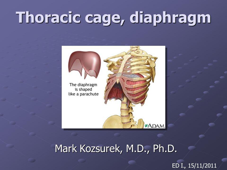Thoracic cage, diaphragm Mark Kozsurek, M.D., Ph.D. ED I., 15/11/2011